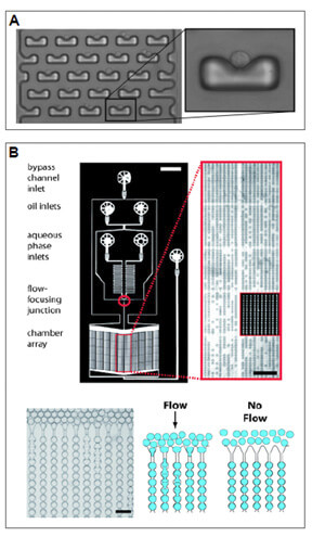 Microfliudic - Integrated cell culture system