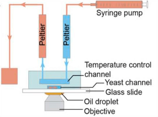 A Review of Heating and Temperature Control in Microfluidic Systems peltier
