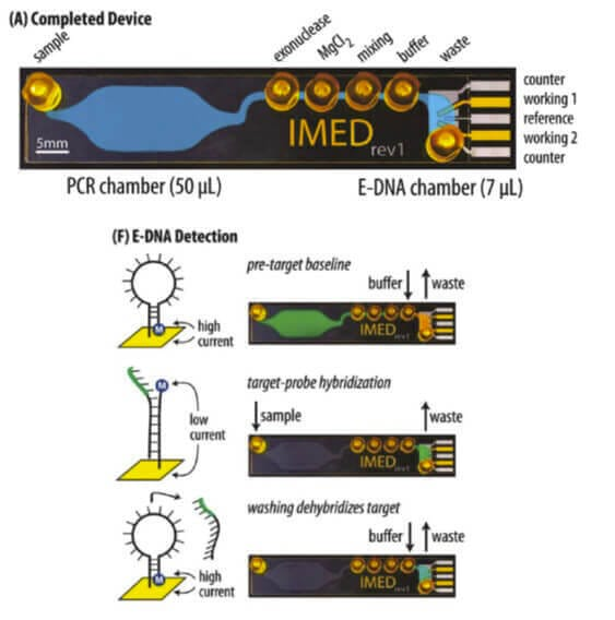 Microfluidic and electrochemistry -Microfluidic lab-on-a-chip including an electrochemical DNA sensors