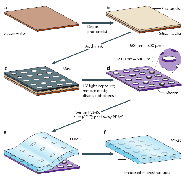 Introduction about soft-lithography for microfluidics - Elveflow
