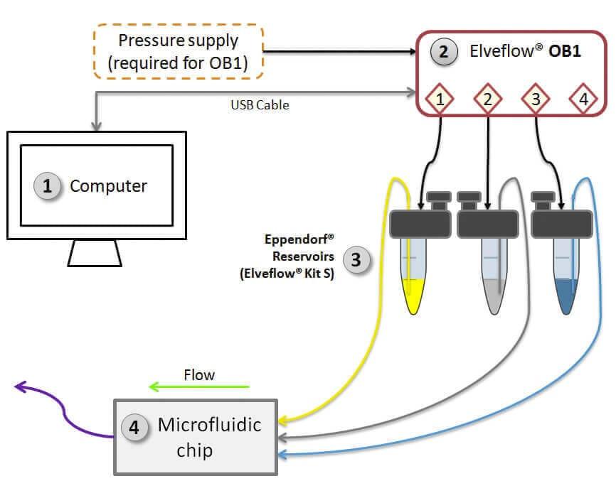 Microfluidic cardiac cell culture model diagram