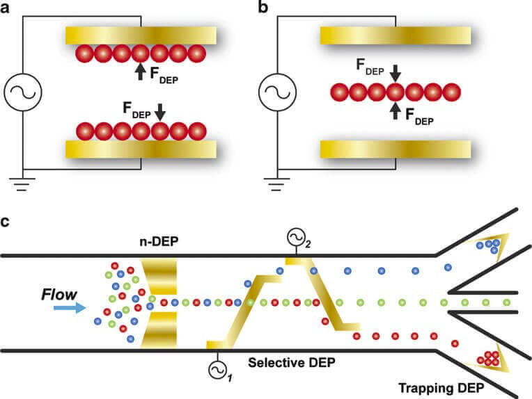 Label Free Microfluidic Cell Separation And Sorting Review