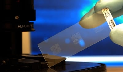 Biochip ORGAN ON CHIP microfluidic