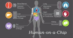organs on chip human
