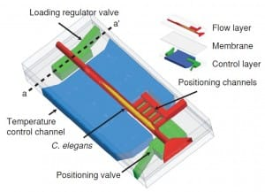 C. elegans immobilization via microfluidics a short review