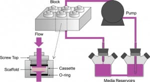 Microfluidic cell culture perfusion