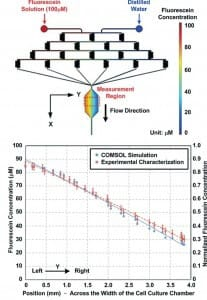 microfluidic gradient generator PDMS - Chang et al and COMSOL software