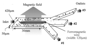 Ferromagnetic wire magnetized by an external field - cell separation