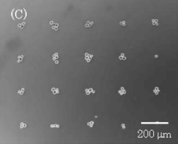 Soft magnets for microfluidic particle positioning