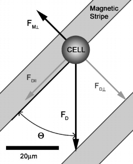 angle between the magnetic and the drag force microfluidic cell separation