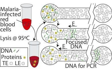 Microfluidics for DNA analysis_DNA Purification isotachophoresis