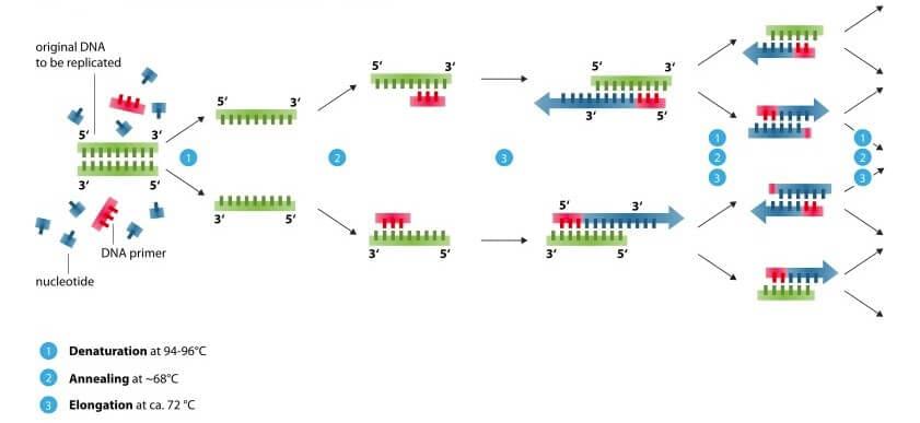 Microfluidics for DNA analysis_PCR