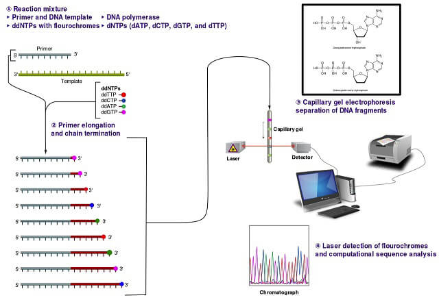 Microfluidics for DNA analysis_Sanger sequencing