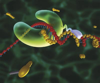 Microfluidic PCR, qPCR, RT-PCR & qRT-PCR_PCR & DNA polymerase