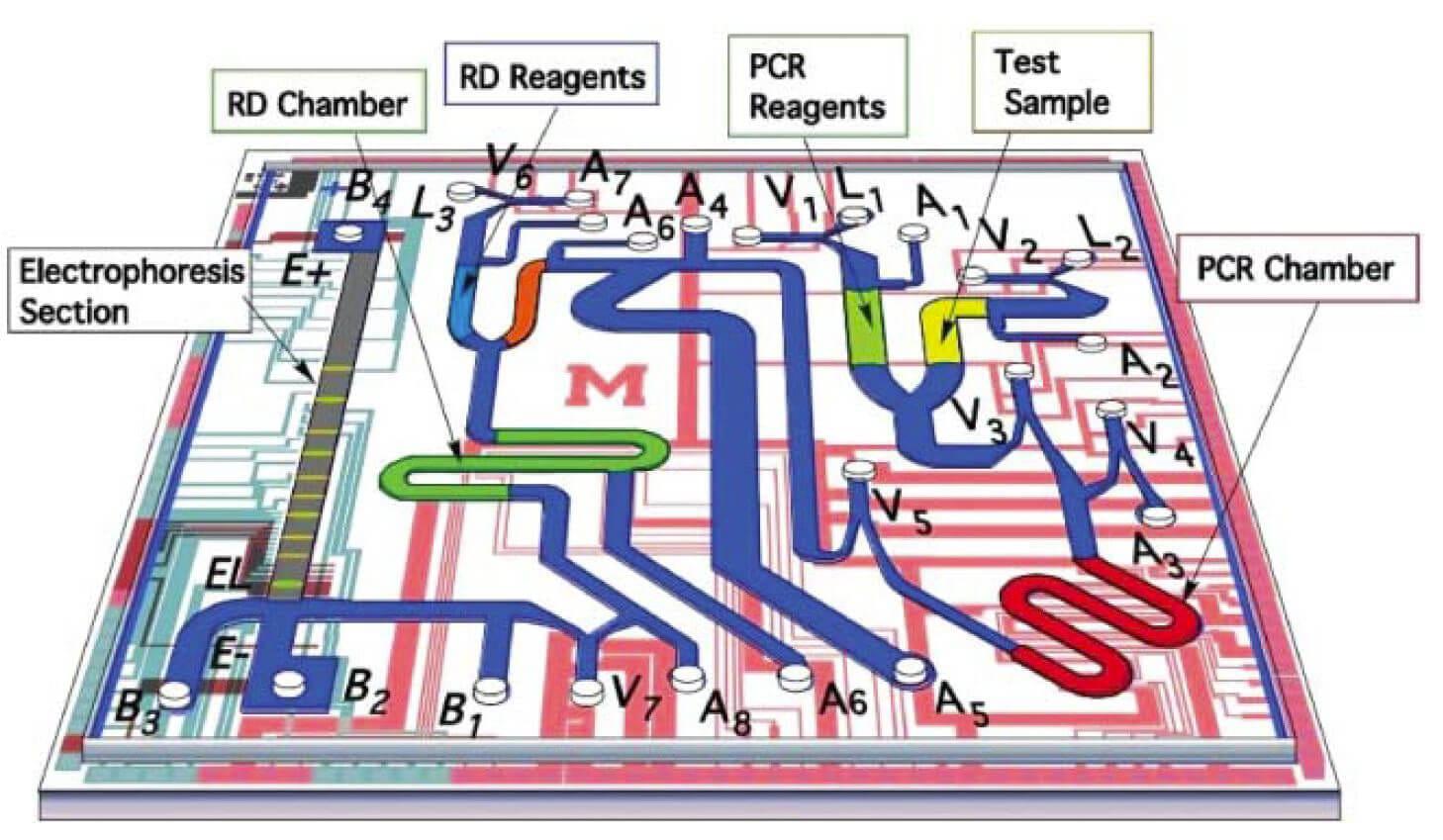 Microfluidic PCR, qPCR, RT-PCR & qRT-PCR_PCR & Electrophoresis chip