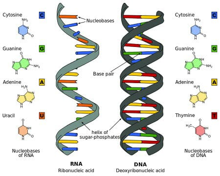 Microfluidic PCR, qPCR, RT-PCR & qRT-PCR_RNA & DNA differences