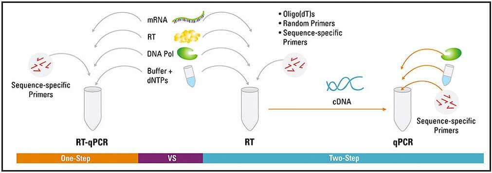 Microfluidic PCR, qPCR, RT-PCR & qRT-PCR_RT PCR one and two steps