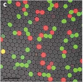 Microfluidic PCR, qPCR, RT-PCR & qRT-PCR_digital PCR mutant detection