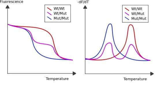 Microfluidic PCR, qPCR, RT-PCR & qRT-PCR_qPCR Melting curve analysis