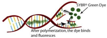 Fluorescence reader for microfluidic qPCR