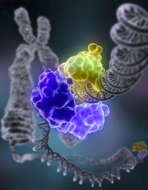 Microfluidic-Molecular machines for DNA repair-The DNAREPAIRMAN Project-1