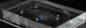 organ-on chip-microfluidic-  research project-