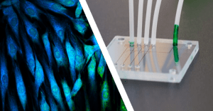 Long-term-cell-culture-microfluidic-chip
