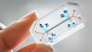 Organs on chips
