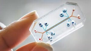 3D cell culture methods and applications - a short review-3D CELL CULTURE APPLICATIONS-microfluidic 3D cell culture  Organs-on-chips