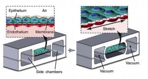 3D cell culture methods and applications - a short review-3D CELL CULTURE APPLICATIONS-microfluidic 3D cell culture  Organs-on-chips-lung-on-chip