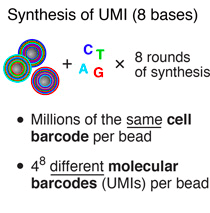 UMI-synthesis-synthesis-drop-seq-microfluidics-single-cells-analysis-ARN-AND-barcode-complex-tissue