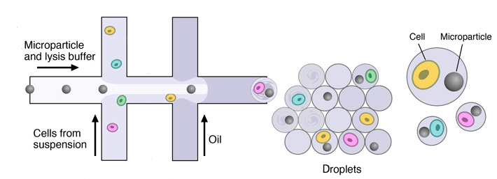 microfluidic-device-drop-seq-microfluidics-single-cells-analysis-ARN-AND-barcode-complex-tissue
