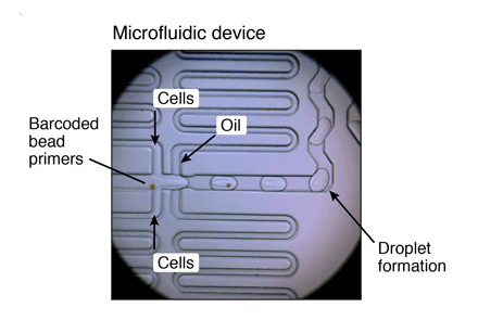 microfluidic-device-picture-drop-seq-microfluidics-single-cells-analysis-ARN-AND-barcode-complex-tissue