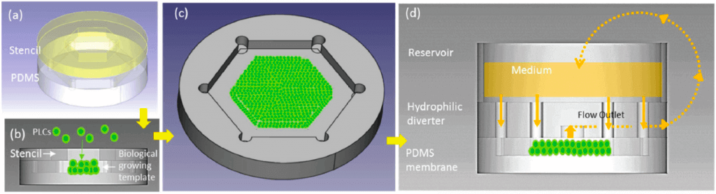 Figure 3: Schematic diagram of design principles. Multilayered PLCs were deposited on PDMS membrane to create a biological growing template and hexagonal coutour. From Weng YS and al., 2017, Scaffold-Free Liver-On- A-Chip with Multiscale Organotypic Cultures.