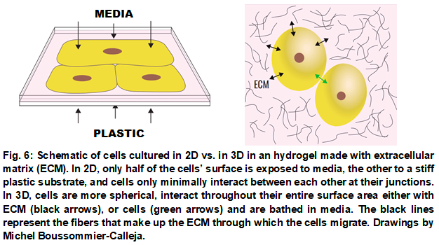 3D cell culture _ 2Dvs3D_Elvesys