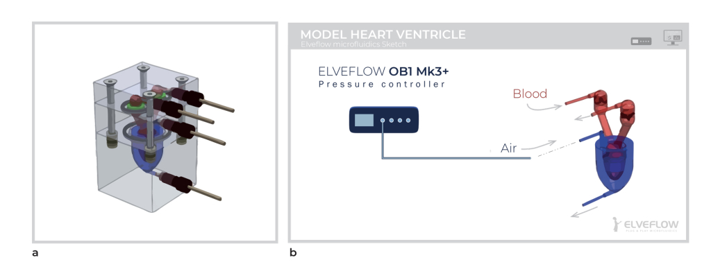 microfluidic tissue engineering model heart ventricule