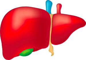 DeLIVER_Organ-on-chip_liver_sinusoid-Elvesys-liver
