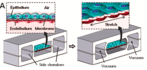 Membrane-Lung-on-Chip-Microfluid-Applications-Elveflow