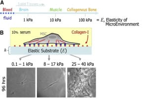 Substrate-texture-Lung-on-Chip-Microfluidics-Applications-Elveflow