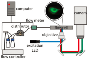 FRET-protein interactions-microfluidic pump-elveflow