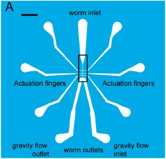 chip microfluidics elveflow
