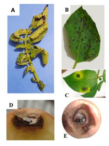MAHT-FunSST_lab-on-chip_screening-Elvesys-fungicides