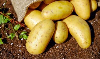 MAHT-FunSST_lab-on-chip_screening-Elvesys-potatoes