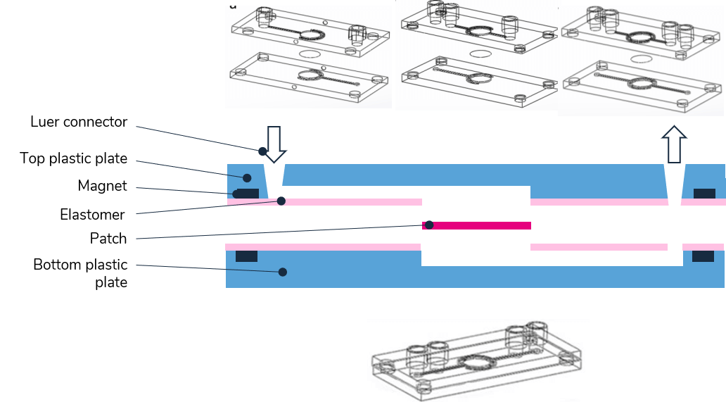 organ-on-chip-microlfuidics-chip-biology-