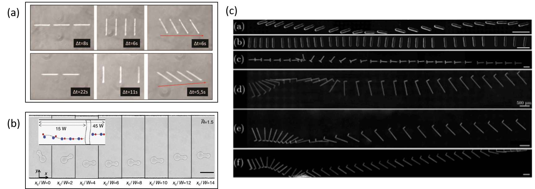 Confined particles in microfluidic devices a review   Elveflow